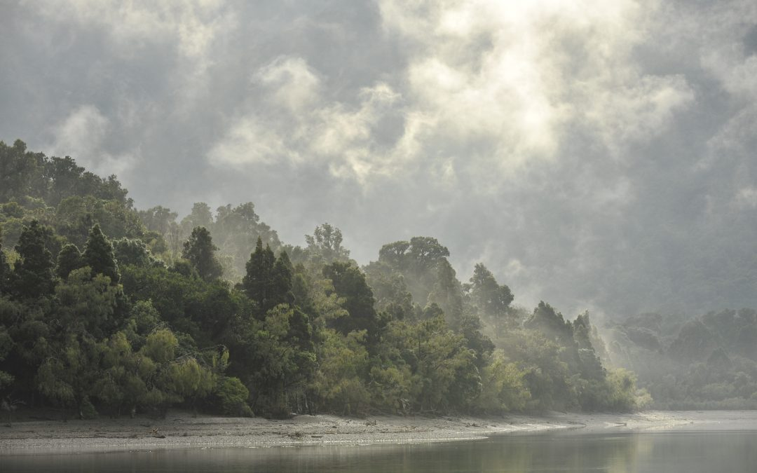 Hollyford Conservation Trust Launch – a Huge Success